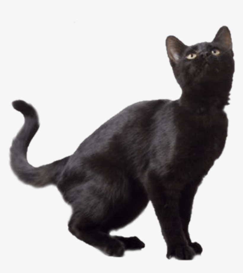 Free Png Black Cat Png Images Transparent , Black Cat