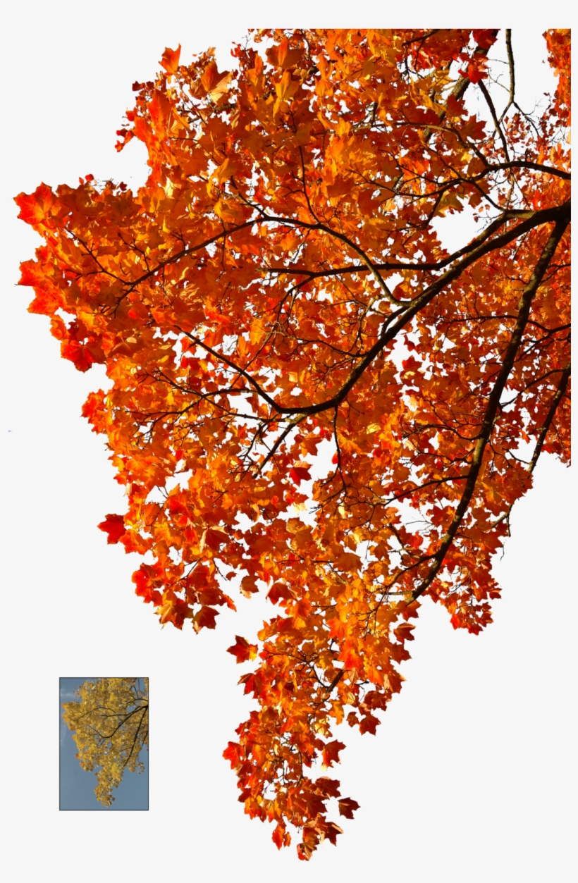 Autumn Leaves Falling Png Clipart Stock - Autumn Leaves Tree Png, transparent png #24869