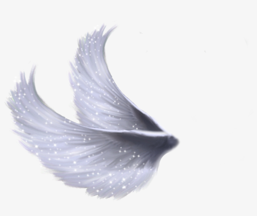 Wings Png 5 By Moonglowlilly - Fairy Wings Png Transparent, transparent png #24996