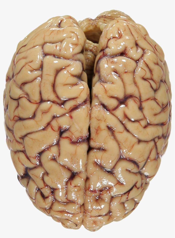 Головной мозг открытка, дня рождения