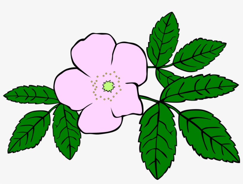 Prickly Wild Rose Drawing Download Flower Watercolor - Clip Art Wild Flower, transparent png #25409