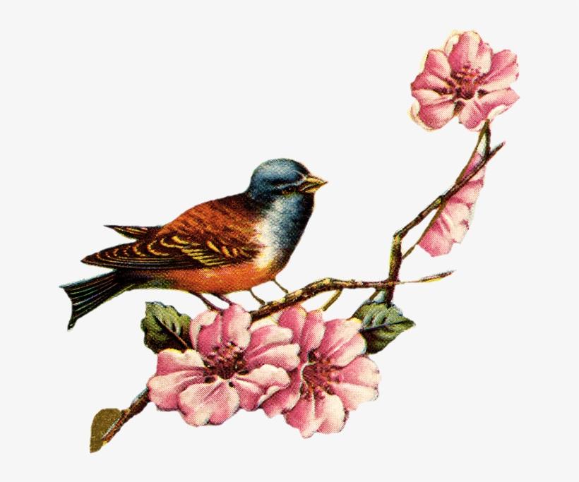 Vintage Love Birds Png Transparent Vintage Love Birds - Cherry Blossom Vintage Png, transparent png #25934