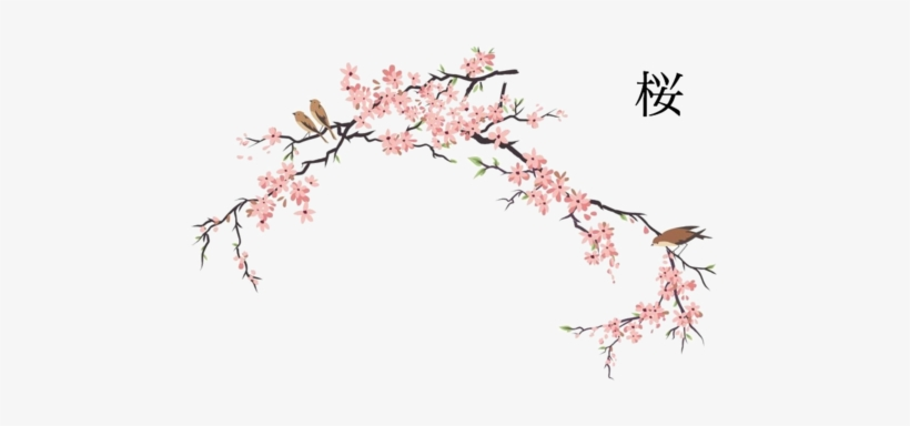 Cherry Blossom Png - Japanese Cherry Blossom Drawing, transparent png #27553