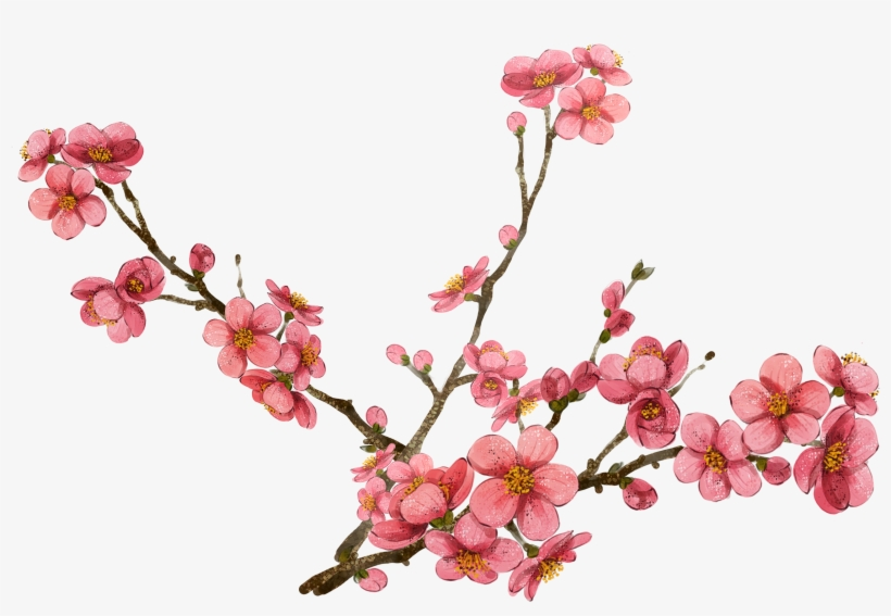 Cherry Blossom Clipart At Getdrawings - Cherry Blossom Png, transparent png #28284