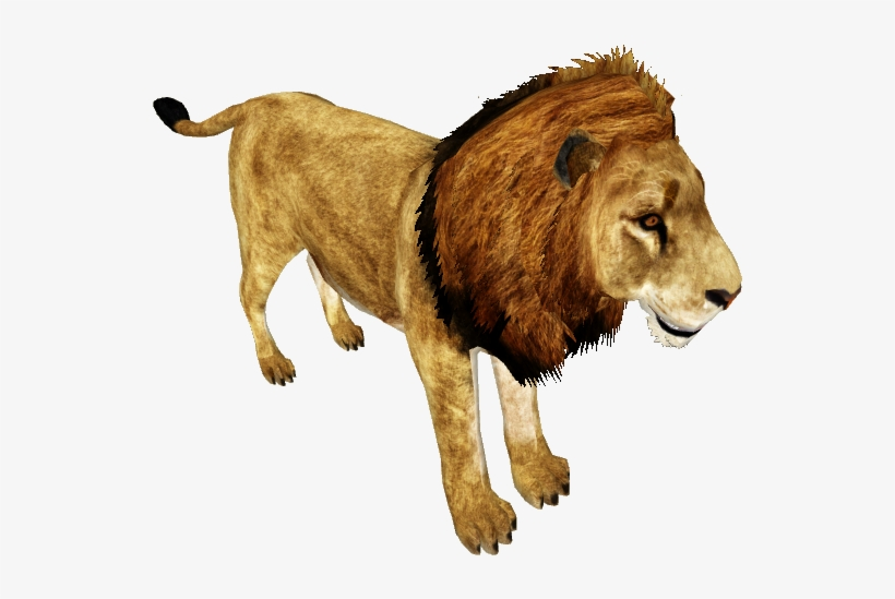 African Lion /version 1 - Wiki, transparent png #28405