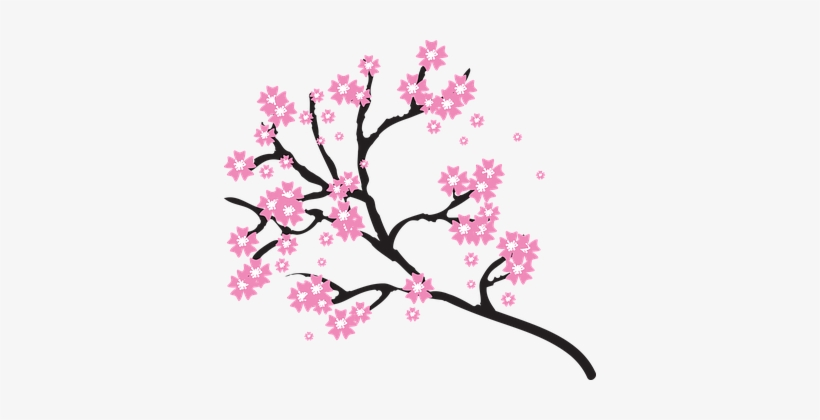 Blossoms Branch Cherry Floral Flowers Natu - Transparent Background Cherry Blossom Clipart, transparent png #28685
