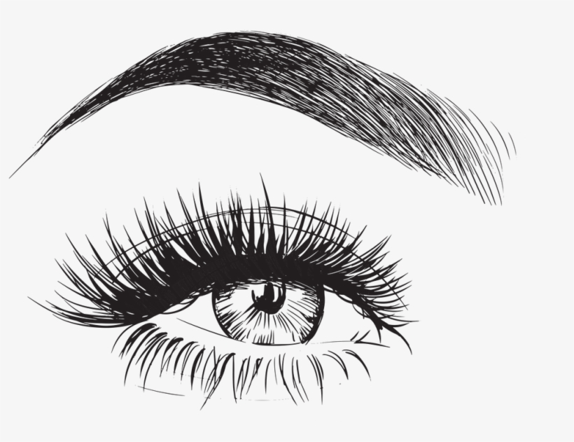 Eyebrow Vector - Eyebrows And Eyelashes Drawing, transparent png #28770