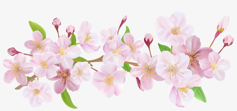 Cherry Blossom Flower Png Picture Download - Cherry Blossom Flower Png, transparent png #29784