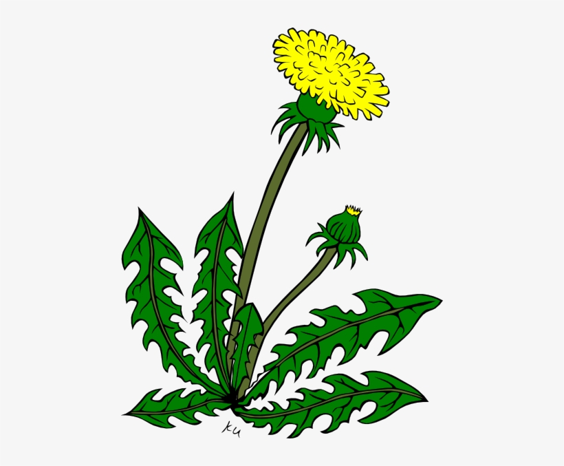 Clip Arts Related To - Clip Art Of Weeds, transparent png #205848
