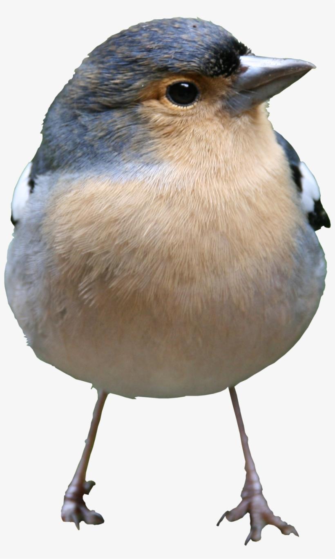 Bird Png Texture - High Quality Bird Png, transparent png #2026549
