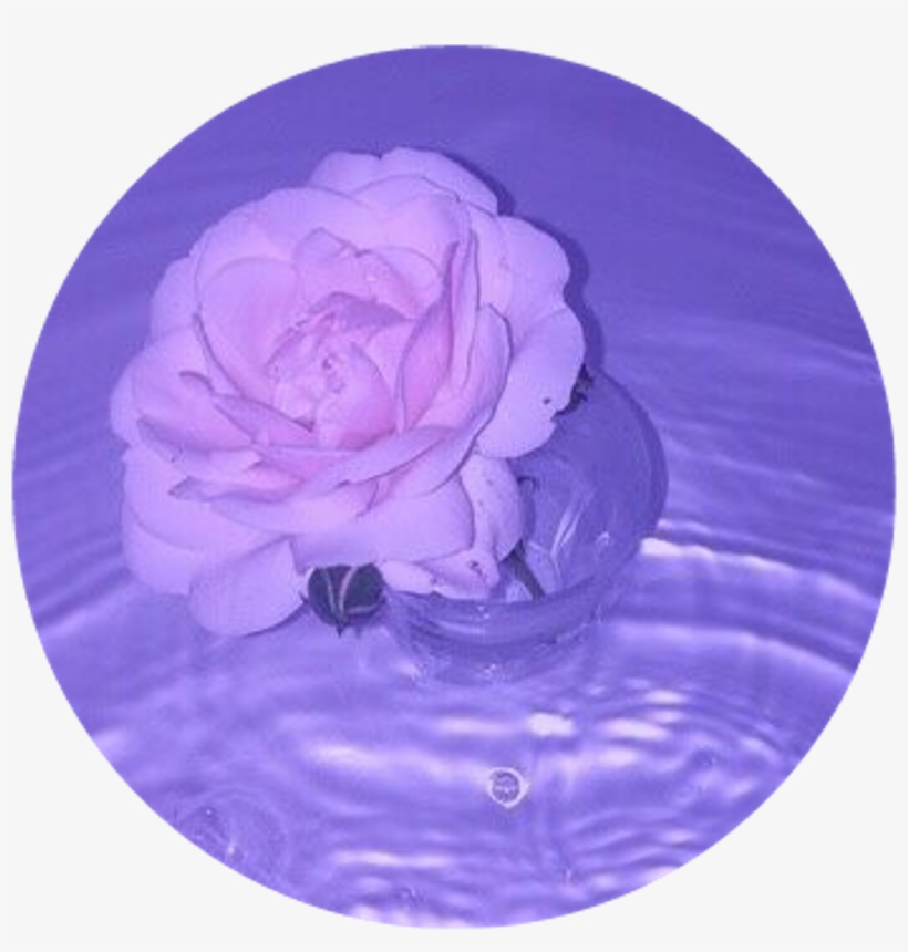 Circle Sticker By - Rose Purple Tumblr Aesthetic - Free ...