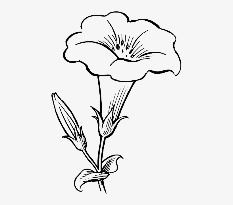 black, outline, drawing, flower, white, flowers, free - flower clipart black  and white - free transparent png download - pngkey  pngkey