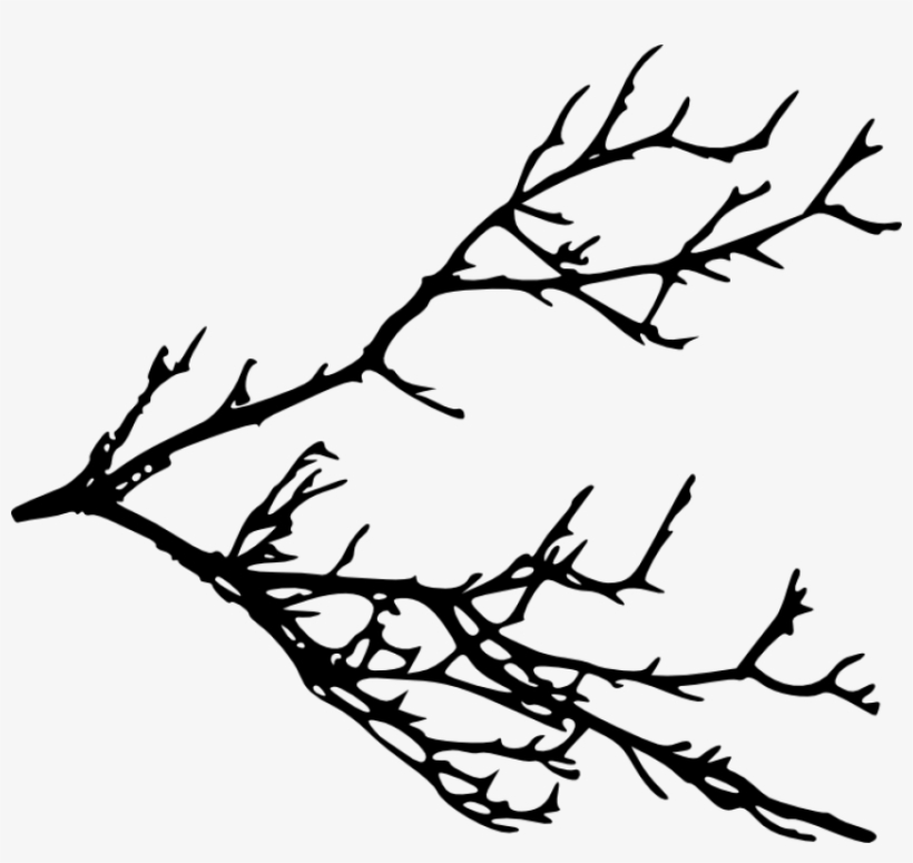 Free Png Tree Branches Silhouette Png Images Transparent - Tree Branches Silhouette Png, transparent png #211912