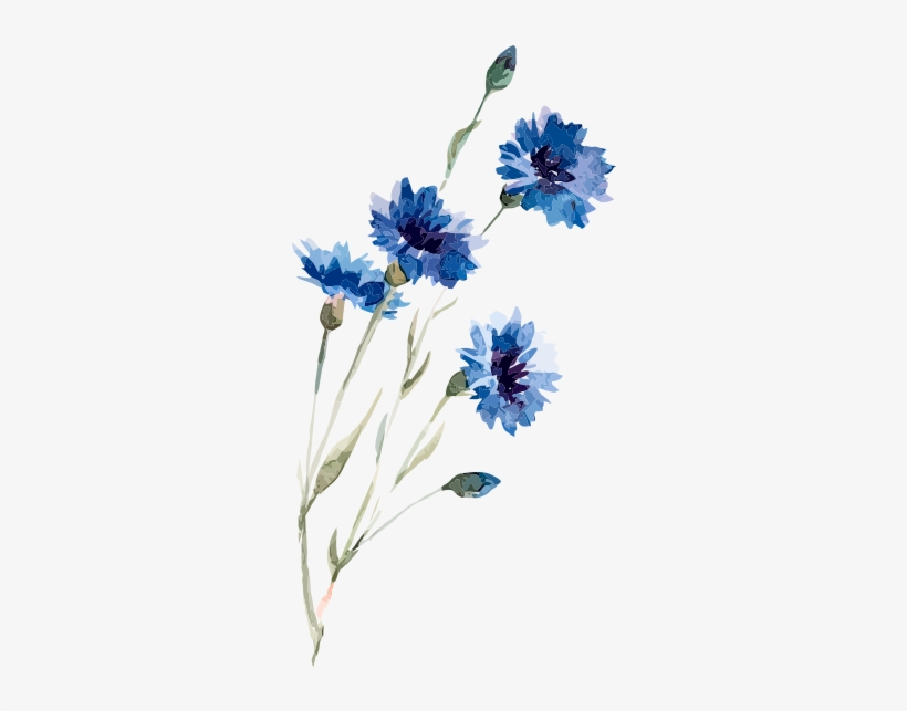Watercolor Painting Illustration Flowers - Watercolor Flower Drawing Blue, transparent png #212864