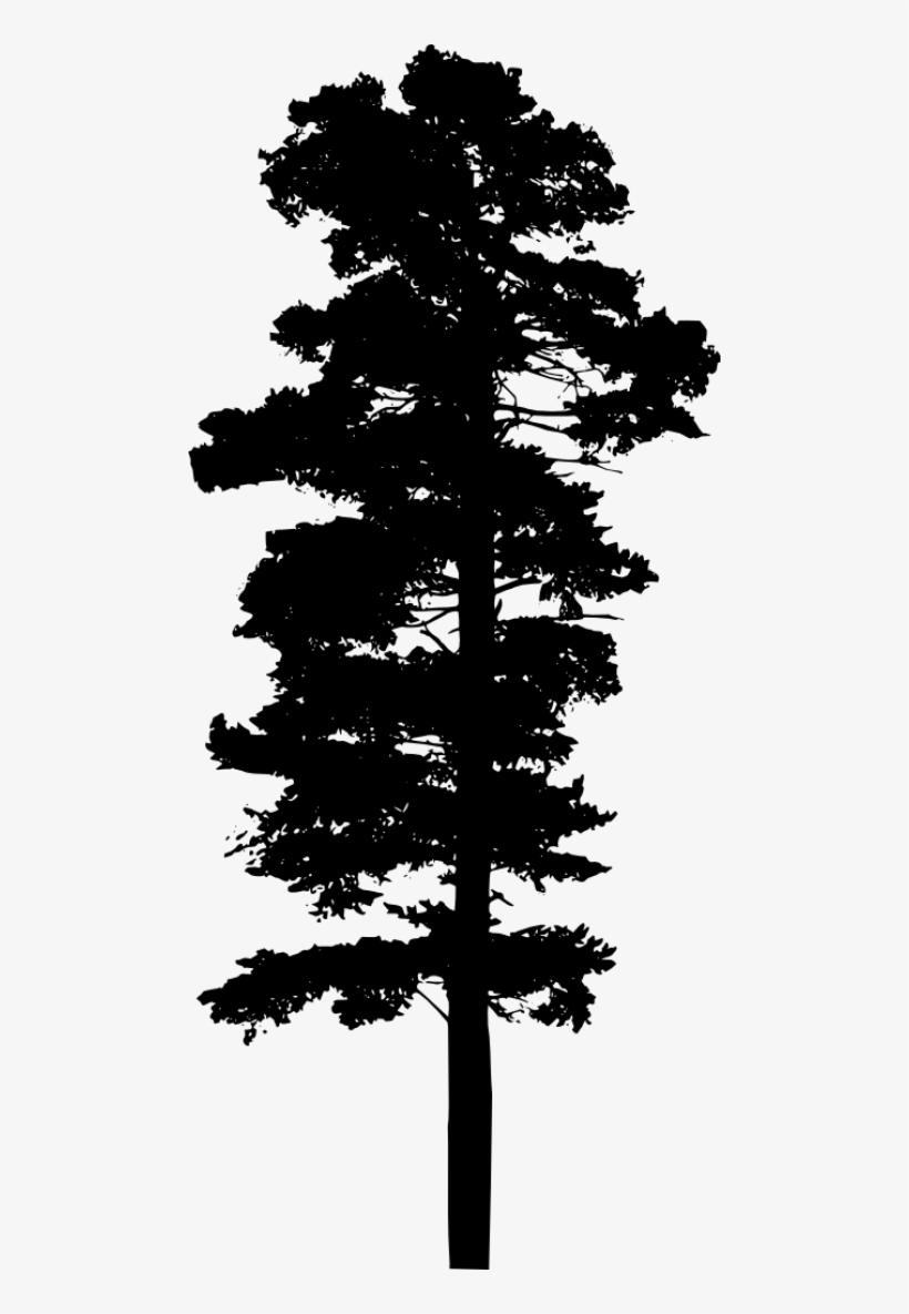 Silhouette Pine Tree Png - Pine Tree Transparent Background, transparent png #219251