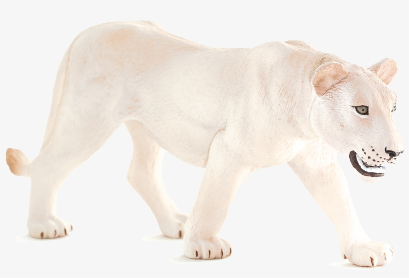Animal Planet: White Lioness, transparent png #2106729