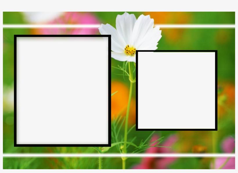 Albums Frames Engagement Frames Love Frames Marriags - Birthday Flower Frame Png, transparent png #2133943