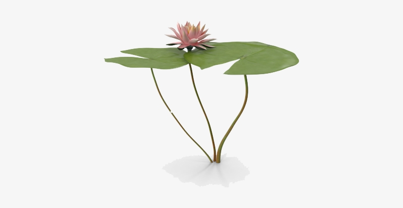 Water Lily Png Free Download - Water Lily Png, transparent png #2161510