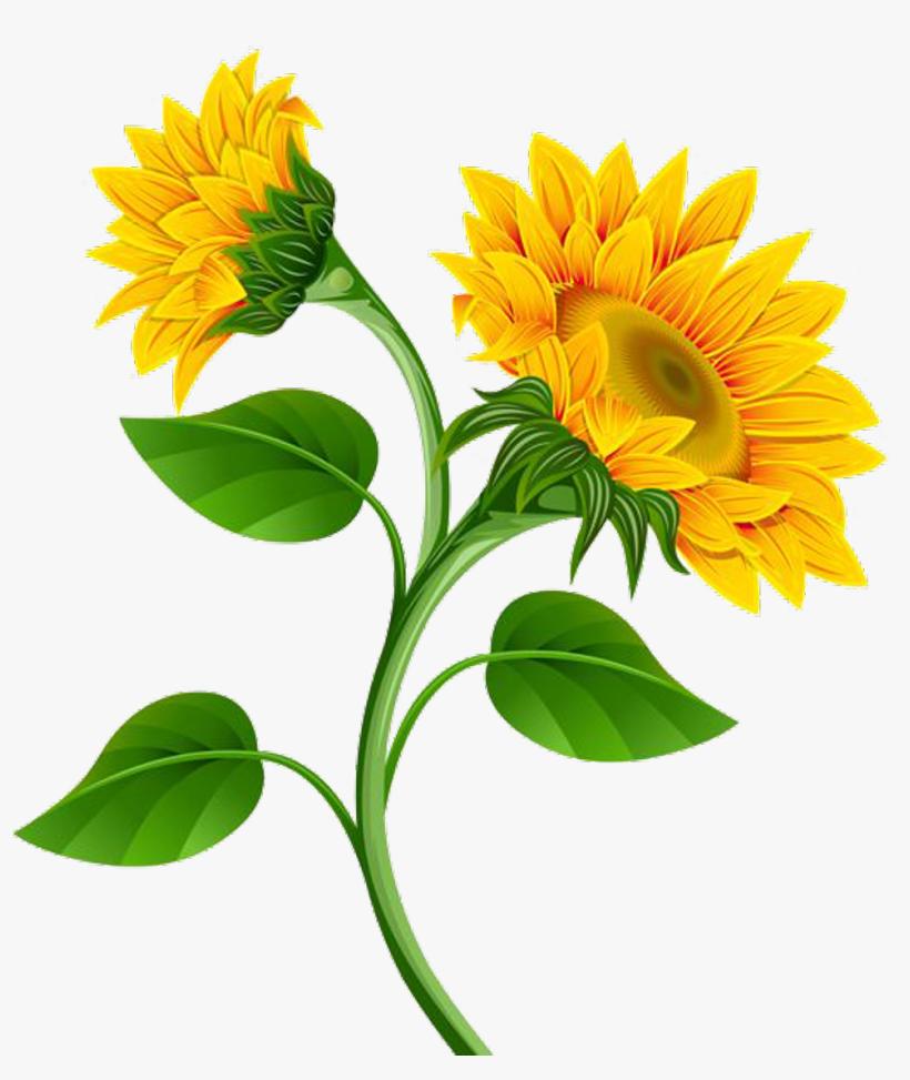 Sunflower Png Photo - Sunflower Clip Art Flowers - Free ...
