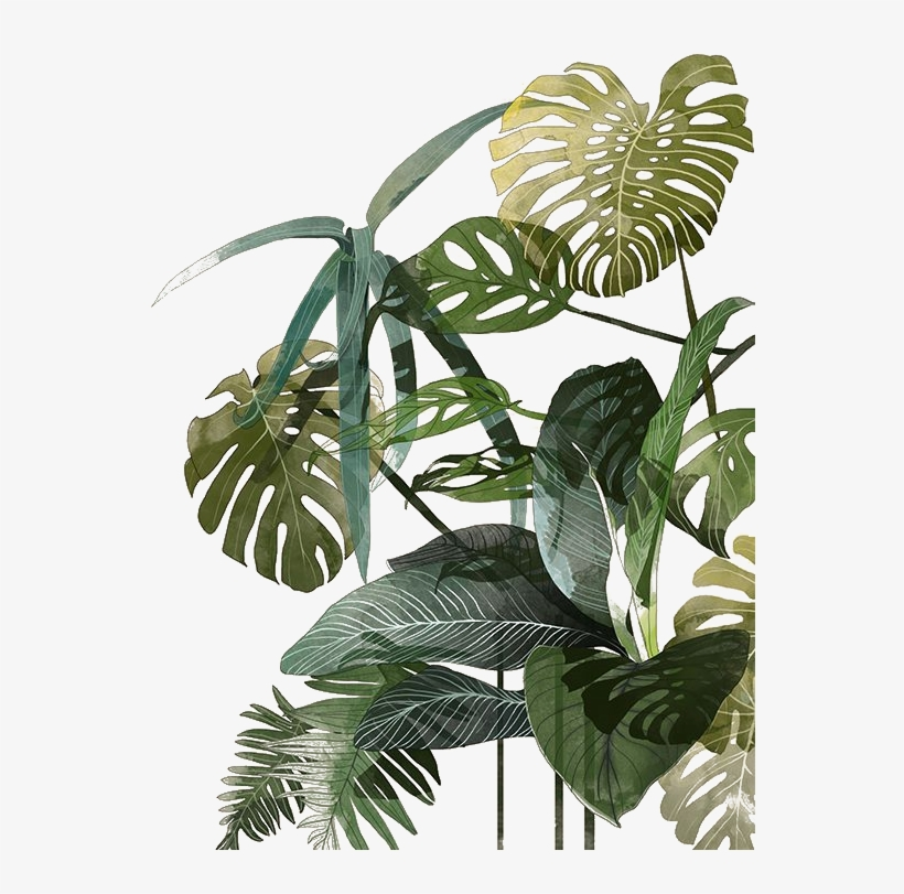 Botanical Illustration Drawing Watercolor Painting - Leaves Illustration Tropical, transparent png #224507