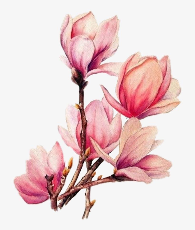 Boquet Bouquet Watercolor Watercolour Flowers Flower - Watercolour Flowers, transparent png #227924