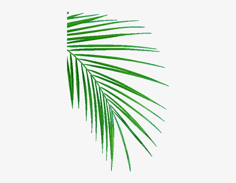 Palm Leafs - Oil Palm Leaf Sampling, transparent png #228815