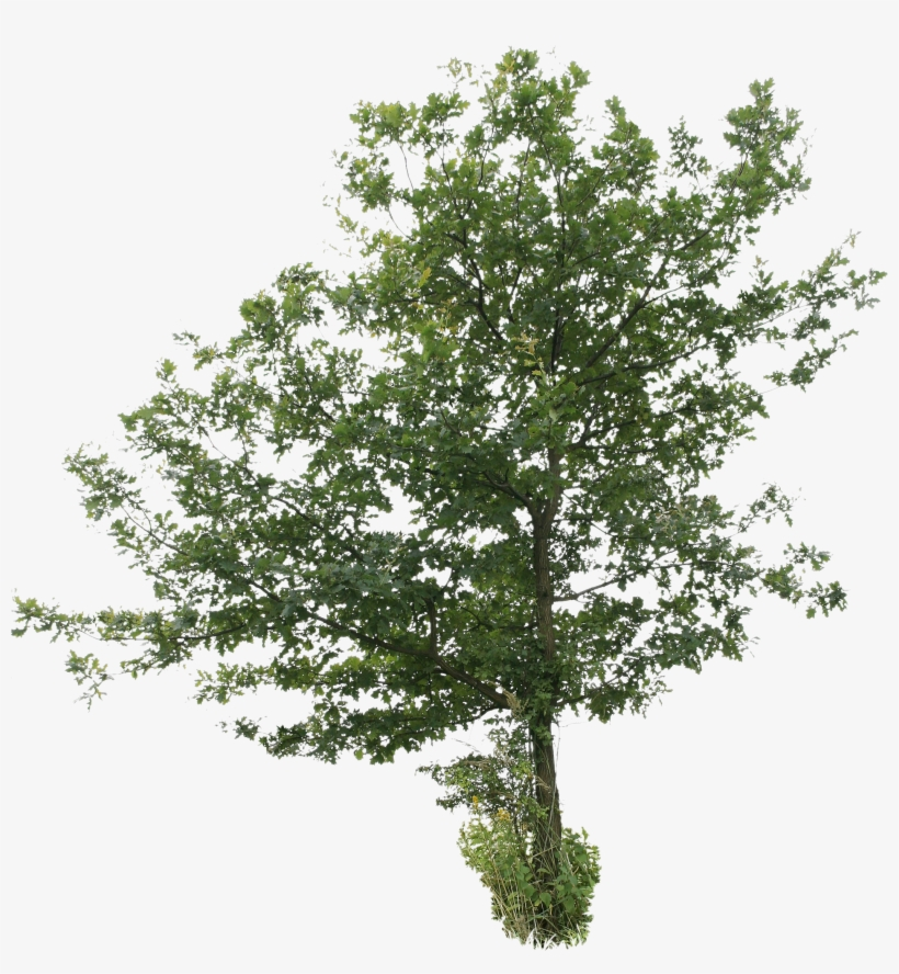 2d Trees - Tree Cut Out Png, transparent png #229774