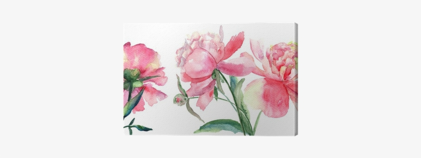 Beautiful Peonies Flowers Watercolor Painting Canvas Watercolor