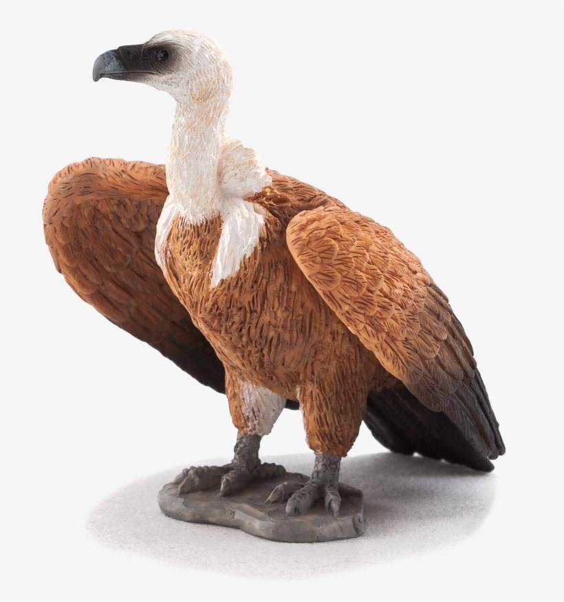 Animal Planet: Griffon Vulture, transparent png #2282614