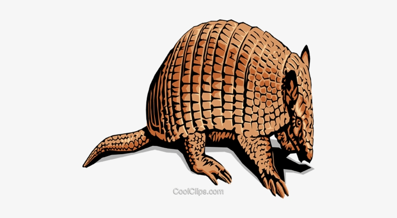 Armadillos Royalty Free Vector Clip Art Illustration - Typical Animal Of Mexico, transparent png #2312634