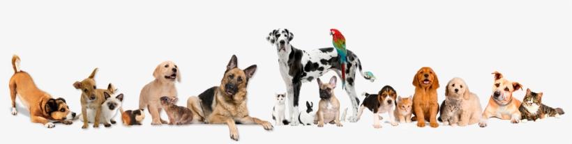 Banner Pet Shop Png Free Transparent Png Download Pngkey