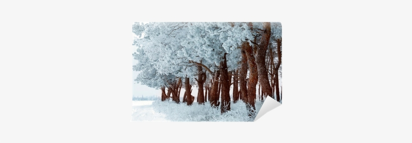 Winter Forest With Frost On The Trees And Snowflakes - Snow Bridge, transparent png #2338673