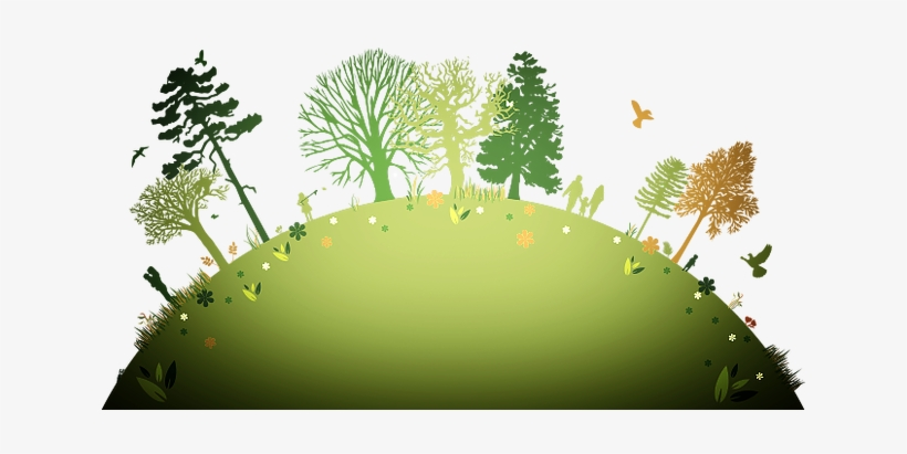 The Best Strategies For Controlling Weeds In The Home - Plant A Tree Background, transparent png #2393892
