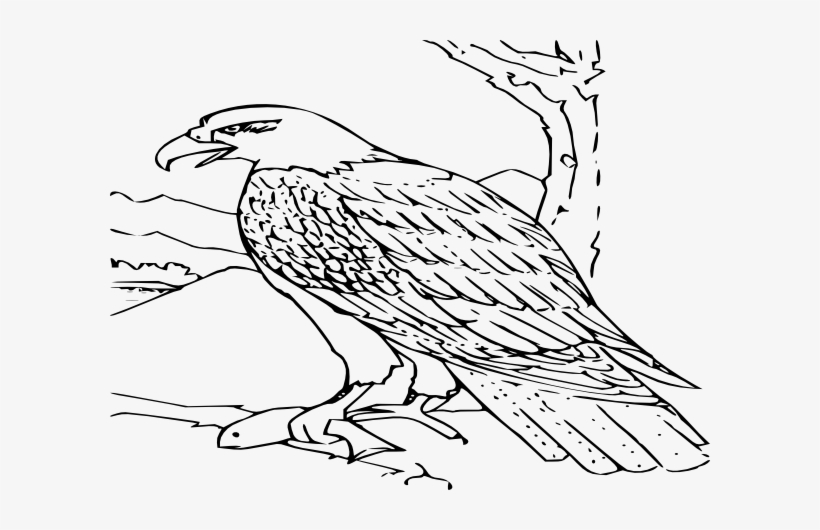 Small - Bald Eagle Coloring Page, transparent png #2398956