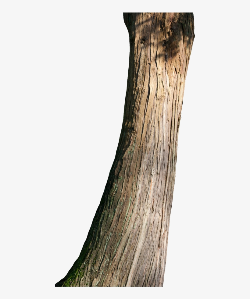 Png Tree Trunk Transparent Tree Trunk - Tree Trunk Png, transparent png #2399317