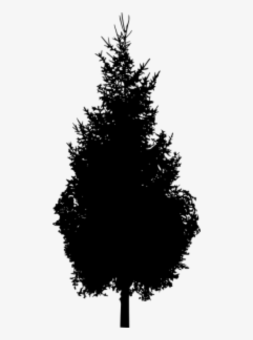 Free Png Pine Tree Silhouette Png Images Transparent - Pine Tree Silhouette Png, transparent png #243240