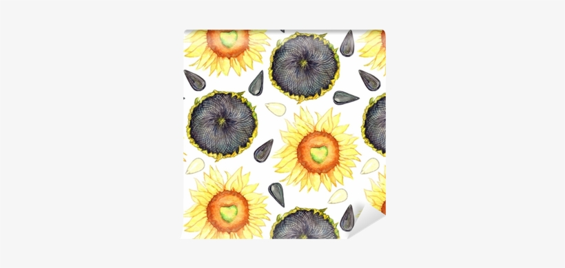 Sunflower Blooming, Ripe Head And Seeds, Seamless Pattern - Seed, transparent png #248681