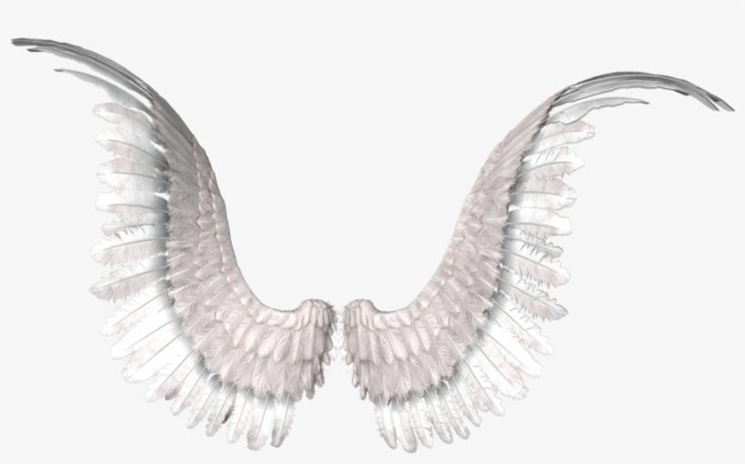 Alas En Png Png Alas De Angel Free Transparent Png Download Pngkey