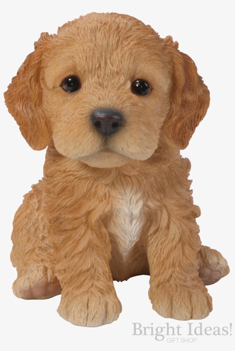 Cockapoo Vivid Arts Pet Pals Puppy Dog Real Life Cockapoo Puppy Free Transparent Png Download Pngkey
