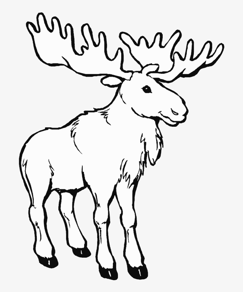 Png Library Animals Printable Coloring Pages Page - Moose Coloring Pages, transparent png #2437857