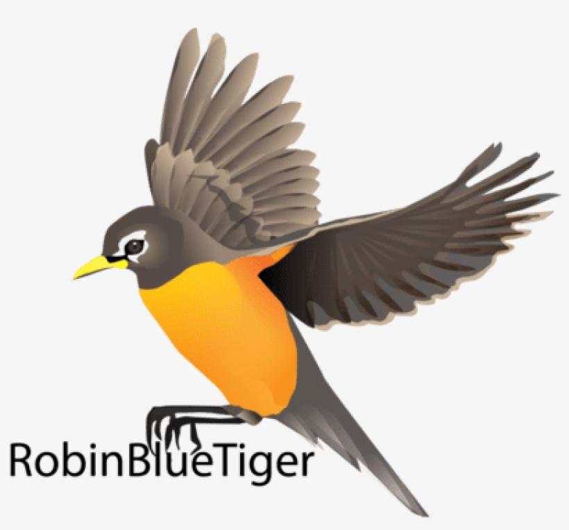 Birds Vector Robin - Robin Bird Flying Drawing - Free Transparent