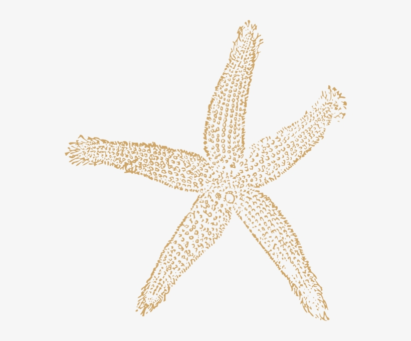 Beach Starfish For Wedding Clip Art At Clker - Fish Clip Art, transparent png #2479833