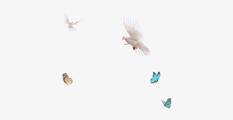 Birds Radha-kirsh Swing - Star Bharat - Free Transparent PNG
