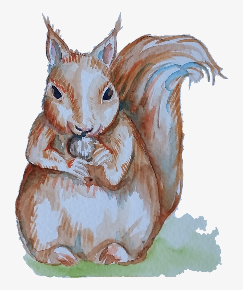 Closeup Of A Squirrel - Squirrel, transparent png #250222