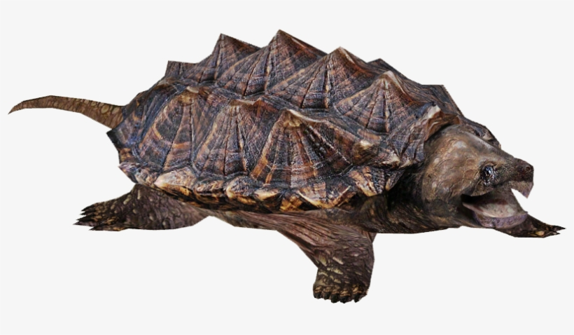 Alligator Snapping Turtle - Snapping Turtle Png, transparent png #251176