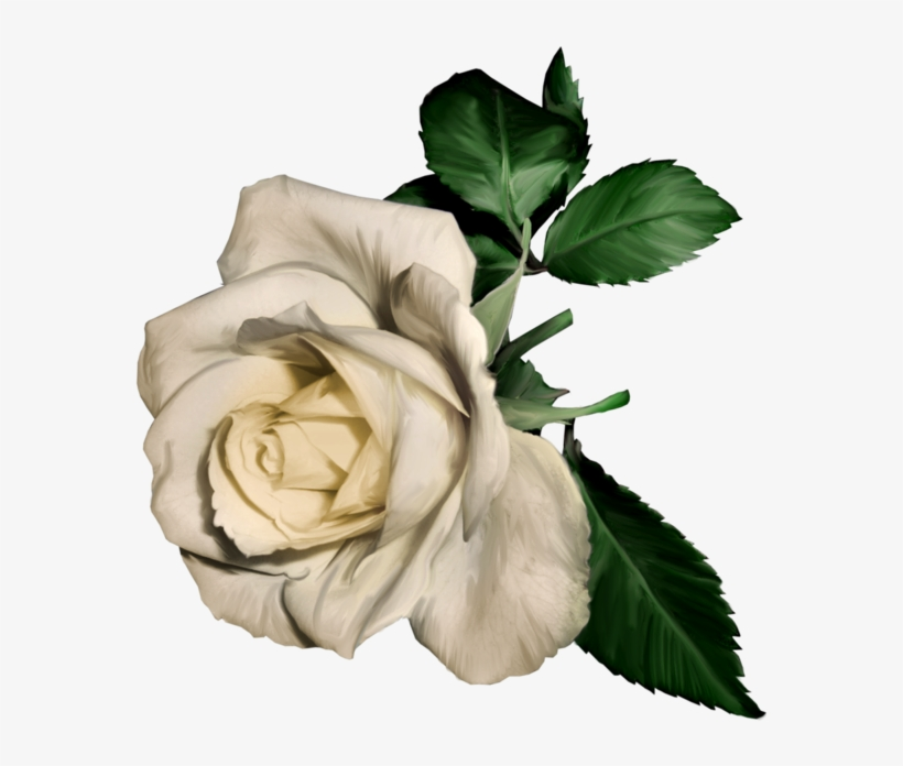 3d White Rose White Rose Painting Png Free Transparent Png