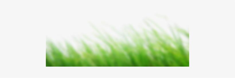 Picsart Cb Editing - Cb Edits Grass Png, transparent png #2505286