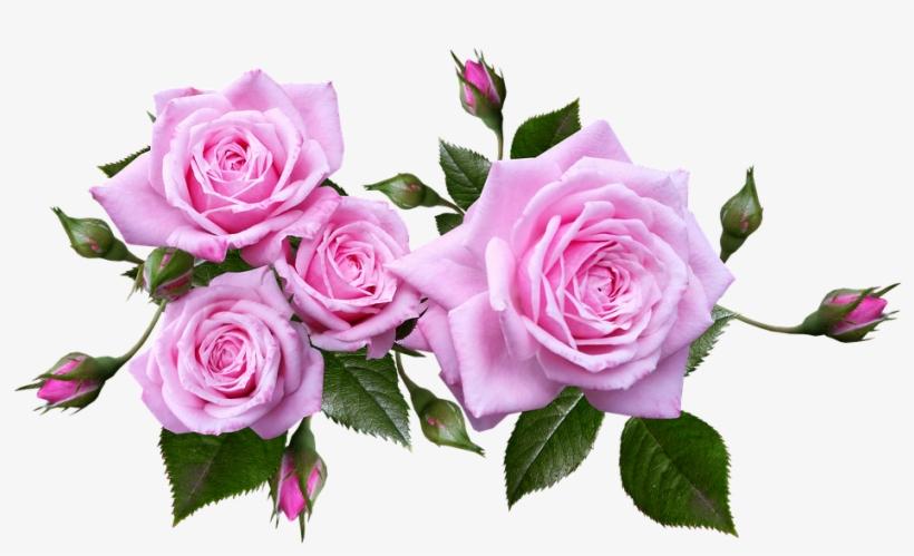 Rose, Flower, Arrangement, Plant - Pink Roses Transparent Background, transparent png #2535710