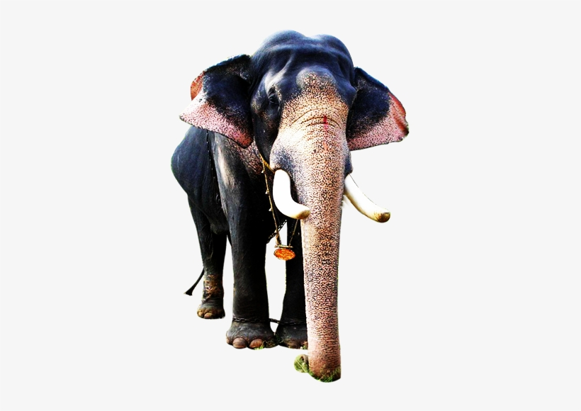 Decorated Kerala Elephant Png / Elephants are large mammals of the family elephantidae and the order proboscidea.