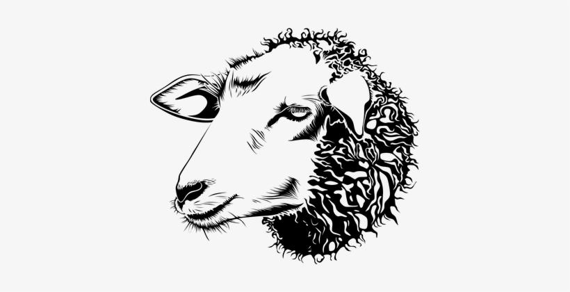 Animal Barnyard Face Farm Head Lamb Sheep - Sheep Head ...